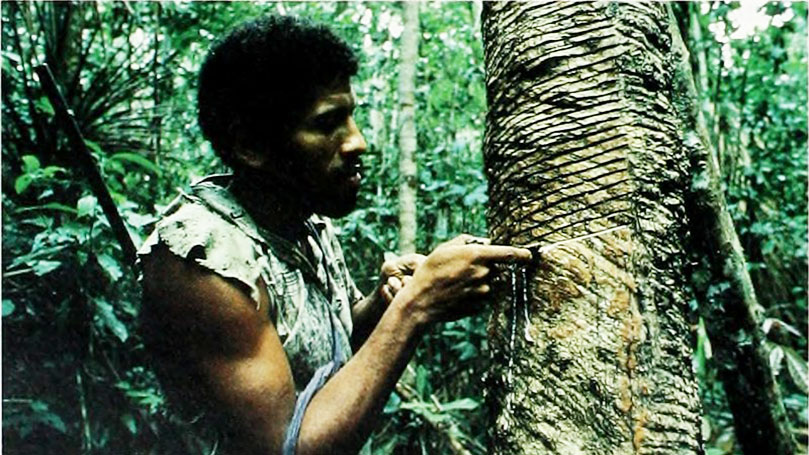 The rubber industry: A history of exploitation